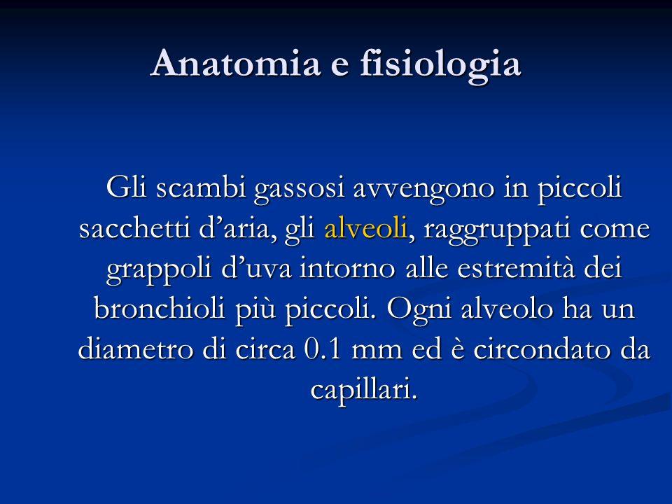 Anatomia e fisiologia Gli scambi gassosi avvengono in piccoli sacchetti daria, gli alveoli, raggruppati come grappoli duva intorno alle estremità dei