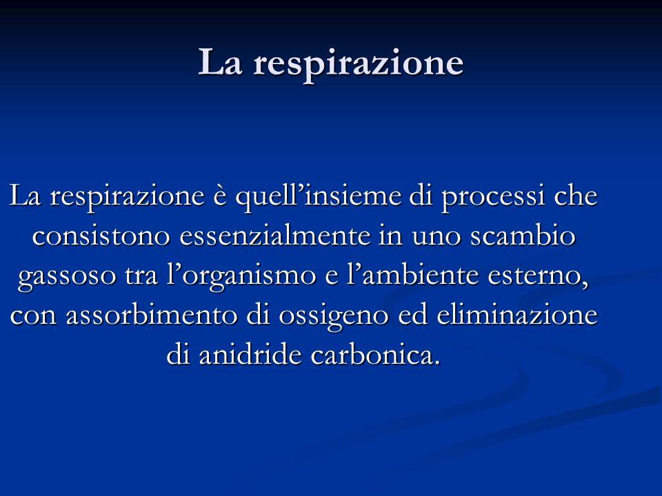 La respirazione è quellinsieme di processi che consistono essenzialmente in uno scambio gassoso tra lorganismo e lambiente esterno, con assorbimento d