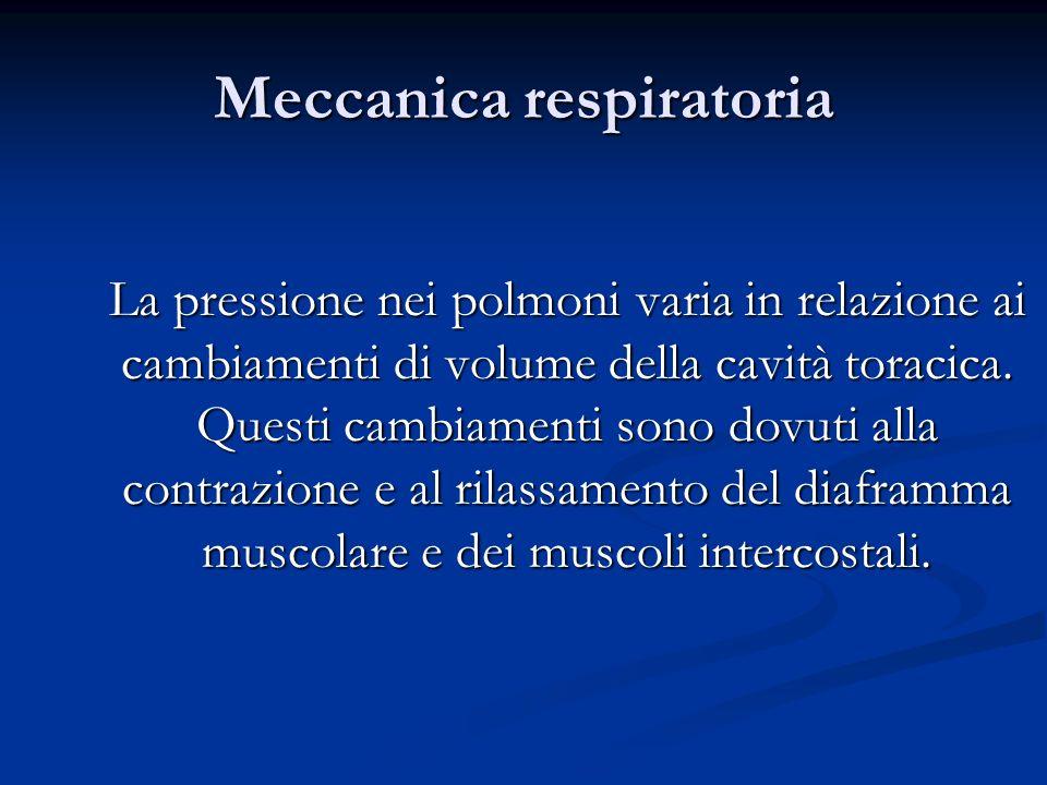 Meccanica respiratoria La pressione nei polmoni varia in relazione ai cambiamenti di volume della cavità toracica. Questi cambiamenti sono dovuti alla