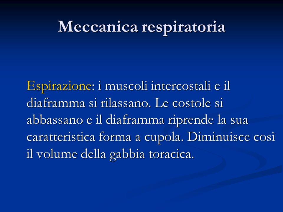 Meccanica respiratoria Espirazione: i muscoli intercostali e il diaframma si rilassano. Le costole si abbassano e il diaframma riprende la sua caratte