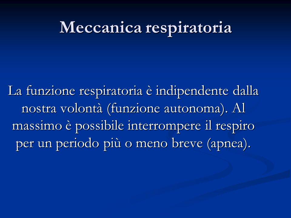 Meccanica respiratoria La funzione respiratoria è indipendente dalla nostra volontà (funzione autonoma). Al massimo è possibile interrompere il respir