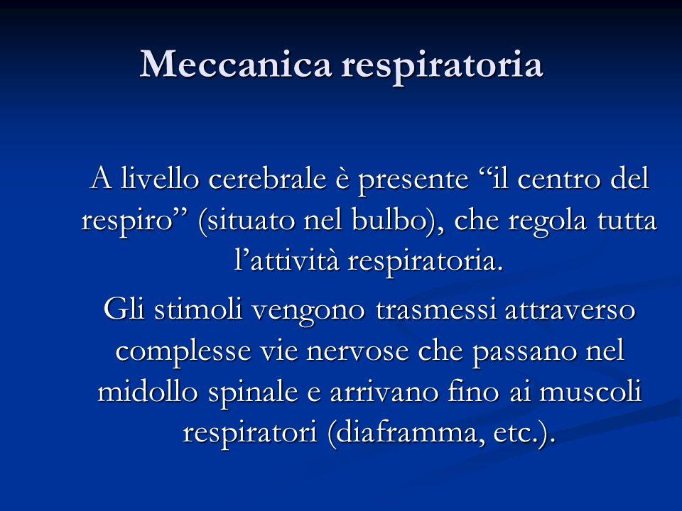 Meccanica respiratoria A livello cerebrale è presente il centro del respiro (situato nel bulbo), che regola tutta lattività respiratoria. Gli stimoli