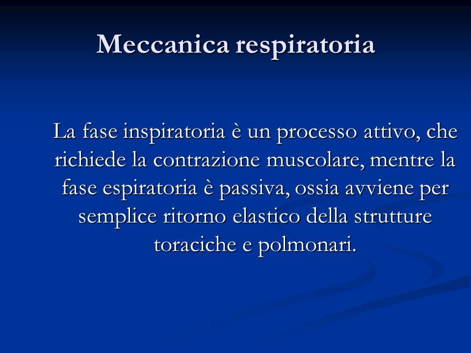 Meccanica respiratoria La fase inspiratoria è un processo attivo, che richiede la contrazione muscolare, mentre la fase espiratoria è passiva, ossia a