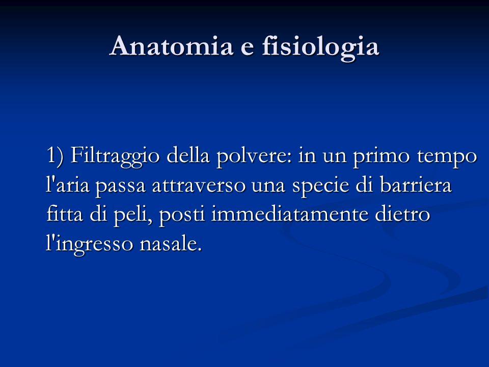 Anatomia e fisiologia 1) Filtraggio della polvere: in un primo tempo l'aria passa attraverso una specie di barriera fitta di peli, posti immediatament