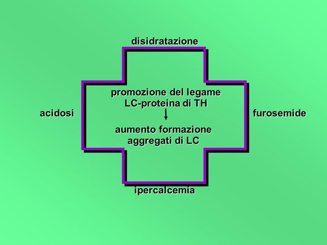 disidratazione furosemide ipercalcemia acidosi promozione del legame LC-proteina di TH aumento formazione aggregati di LC