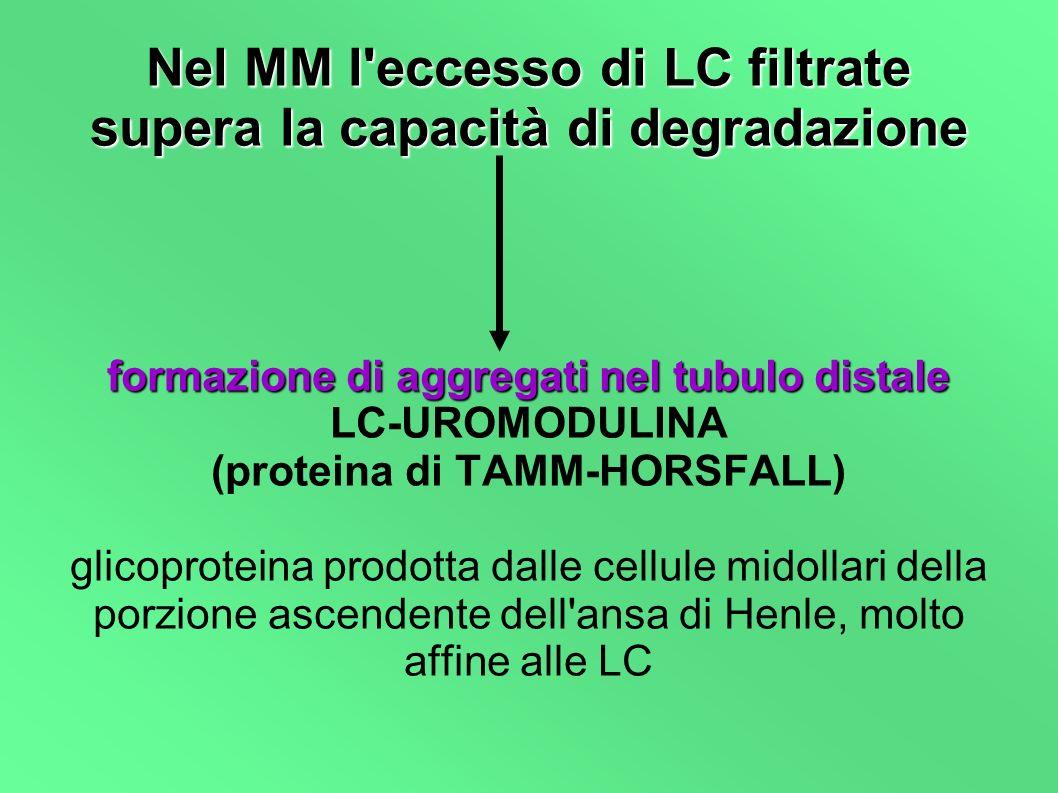 Nel MM l'eccesso di LC filtrate supera la capacità di degradazione formazione di aggregati nel tubulo distale LC-UROMODULINA (proteina di TAMM-HORSFAL