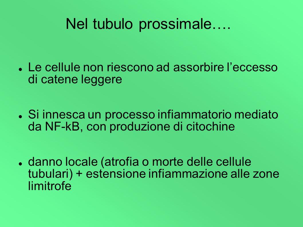 TOSSICITA DA LC NEL TUBULO PROSSIMALE Endocitosi delle LC produzione citochine (IL-6, IL-8, TNF-α) attivazione NFkB produzione metalloproteinasi fibrosi NECROSITUBULARE NECROSI TUBULARE