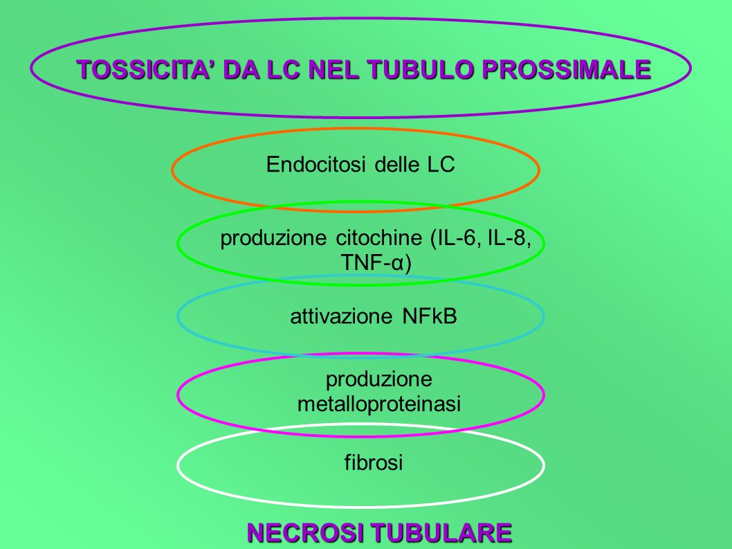 OSTRUZIONE TUBULO PROSSIMALE aumento pressione endoluminale riduzione filtrato glomerulare riduzione flusso di sangue nell interstizio CIRCOLO VIZIOSO: minore è la clearance delle LC, maggiore è la loro concentrazione nel tubulo prossimale