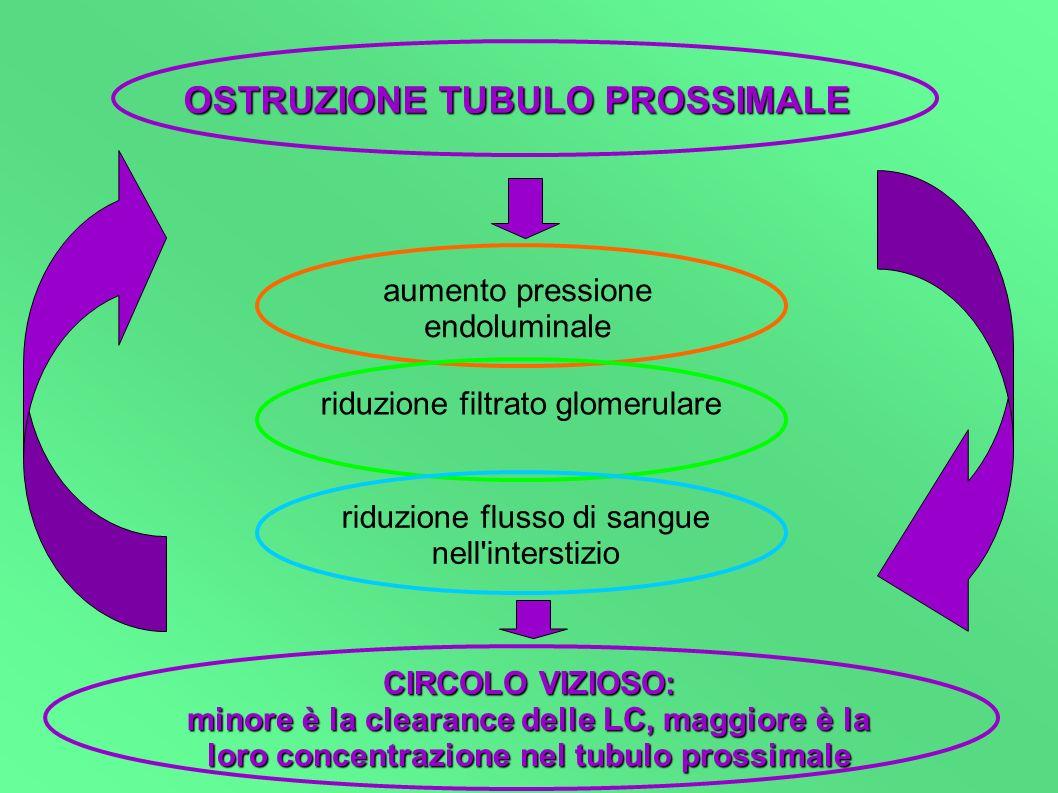 OSTRUZIONE TUBULO PROSSIMALE aumento pressione endoluminale riduzione filtrato glomerulare riduzione flusso di sangue nell'interstizio CIRCOLO VIZIOSO