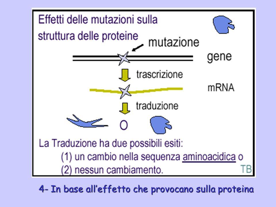 4- In base alleffetto che provocano sulla proteina