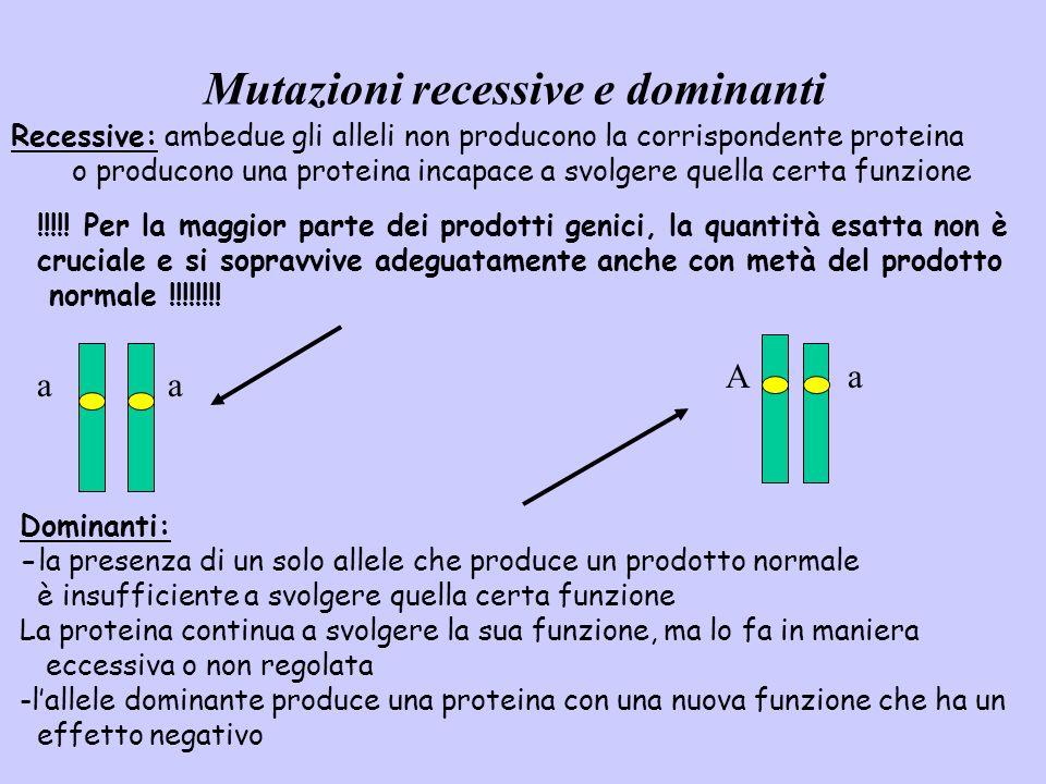 Mutazioni recessive e dominanti Dominanti: -la presenza di un solo allele che produce un prodotto normale è insufficiente a svolgere quella certa funz