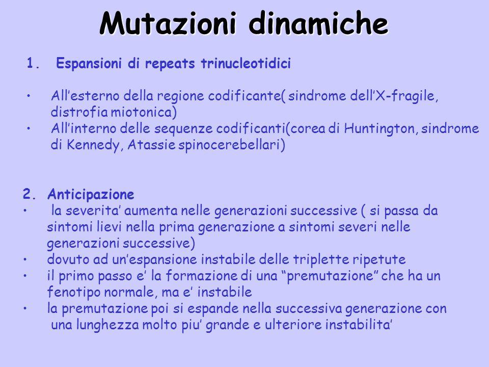 Mutazioni dinamiche 1. Espansioni di repeats trinucleotidici Allesterno della regione codificante( sindrome dellX-fragile, distrofia miotonica) Allint