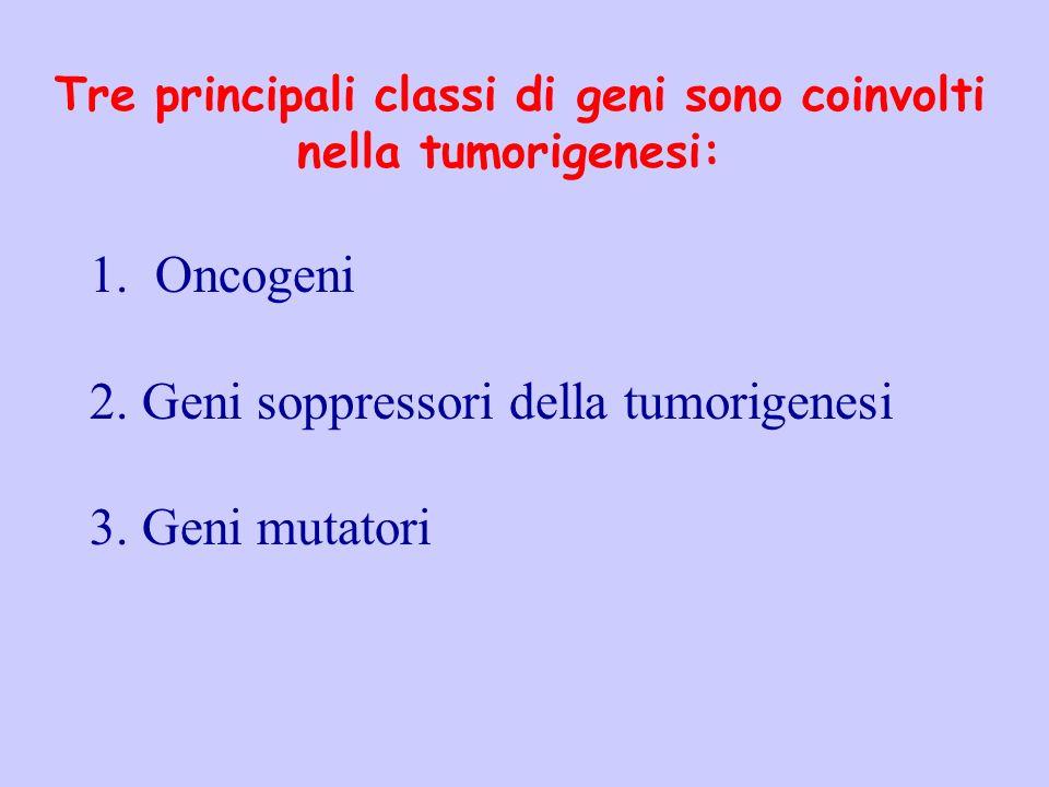 Tre principali classi di geni sono coinvolti nella tumorigenesi: 1. Oncogeni 2.Geni soppressori della tumorigenesi 3.Geni mutatori