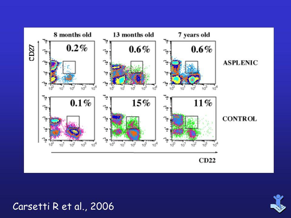 Carsetti R et al., 2006