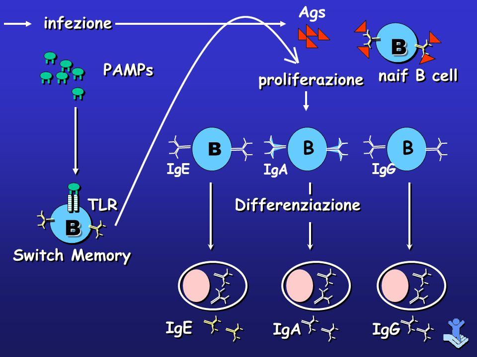 B IgE B IgA B IgG IgE IgA IgG Differenziazione proliferazione infezione BB Switch Memory TLR PAMPs BB naif B cell Ags