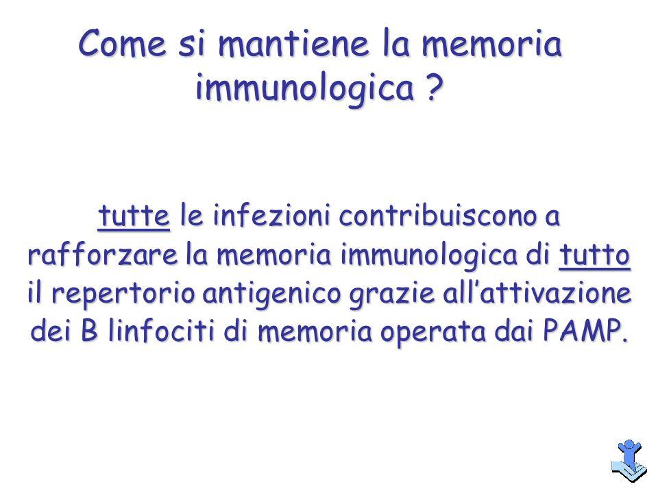 tutte le infezioni contribuiscono a rafforzare la memoria immunologica di tutto il repertorio antigenico grazie allattivazione dei B linfociti di memo