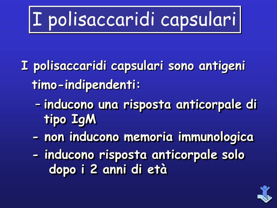 I polisaccaridi capsulari sono antigeni timo-indipendenti: –inducono una risposta anticorpale di tipo IgM - non inducono memoria immunologica - induco