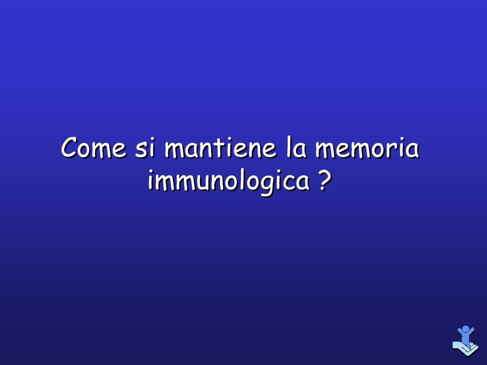 Come si mantiene la memoria immunologica ?
