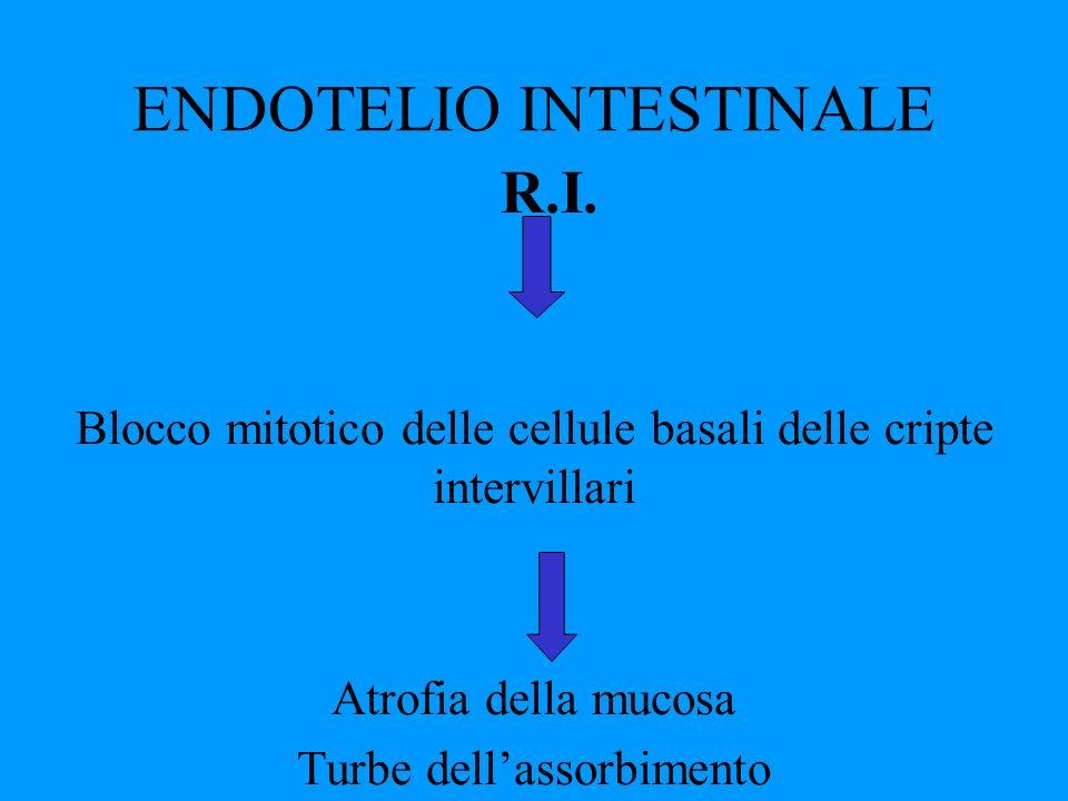 ENDOTELIO INTESTINALE R.I. Blocco mitotico delle cellule basali delle cripte intervillari Atrofia della mucosa Turbe dellassorbimento
