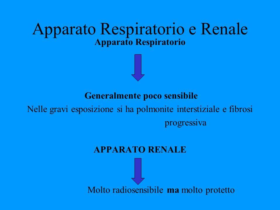 Apparato Respiratorio e Renale Apparato Respiratorio Generalmente poco sensibile Nelle gravi esposizione si ha polmonite interstiziale e fibrosi progr