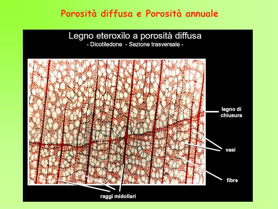 Porosità diffusa e Porosità annuale