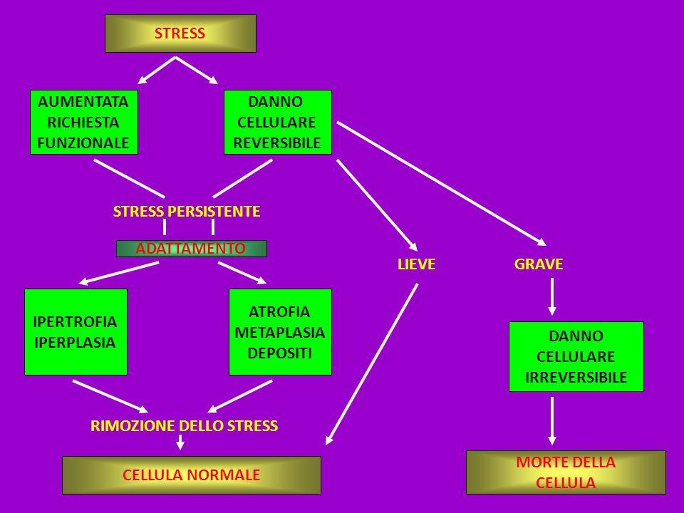 AUMENTATA RICHIESTA FUNZIONALE DANNO CELLULARE REVERSIBILE STRESS PERSISTENTE ADATTAMENTO IPERTROFIA IPERPLASIA ATROFIA METAPLASIA DEPOSITI RIMOZIONE