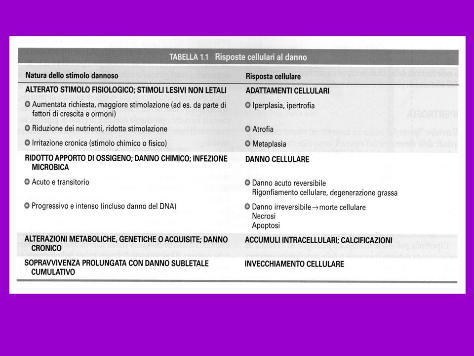 METAPLASIA = sostituzione di un tessuto differenziato di un certo tipo con un tessuto differenziato di tipo diverso.