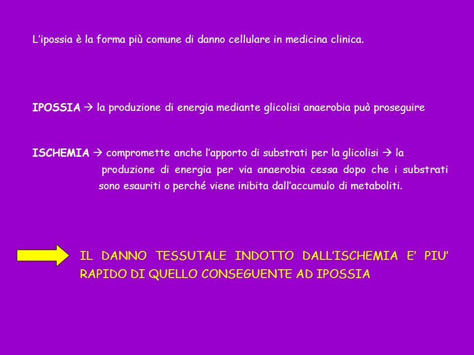 Lipossia è la forma più comune di danno cellulare in medicina clinica. IPOSSIA la produzione di energia mediante glicolisi anaerobia può proseguire IS