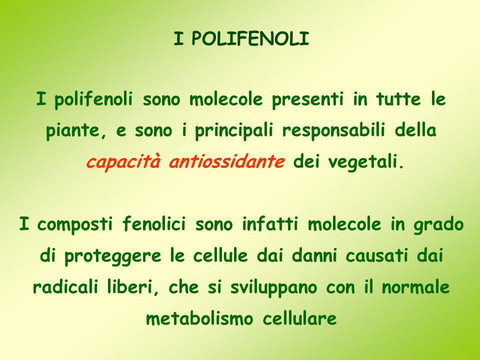 I POLIFENOLI I polifenoli sono molecole presenti in tutte le piante, e sono i principali responsabili della capacità antiossidante dei vegetali. I com