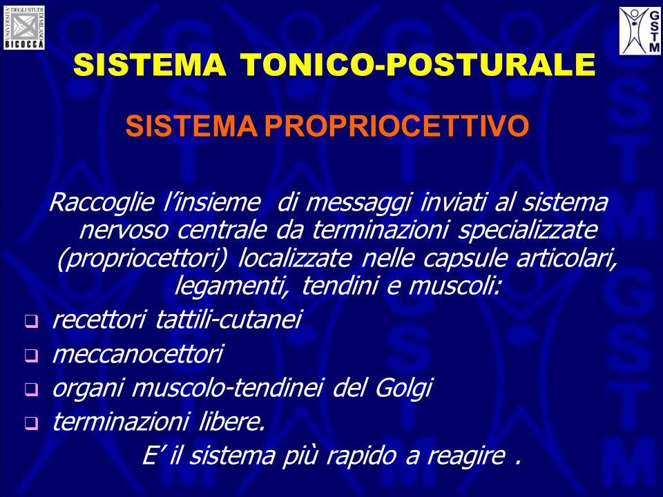 SISTEMA TONICO-POSTURALE SISTEMA PROPRIOCETTIVO Raccoglie linsieme di messaggi inviati al sistema nervoso centrale da terminazioni specializzate (prop