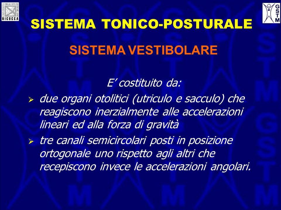 SISTEMA TONICO-POSTURALE SISTEMA VESTIBOLARE E costituito da: due organi otolitici (utriculo e sacculo) che reagiscono inerzialmente alle accelerazion