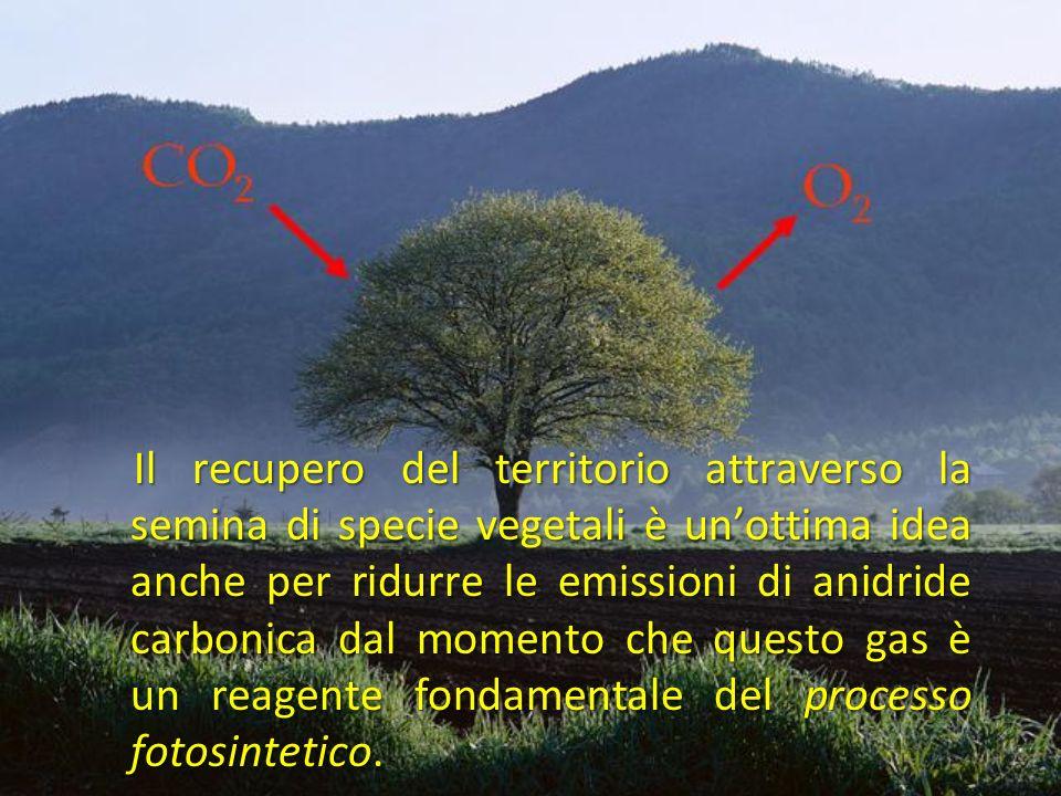 Il recupero del territorio attraverso la semina di specie vegetali è unottima idea anche per ridurre le emissioni di anidride carbonica dal momento che questo gas è un reagente fondamentale del processo fotosintetico.