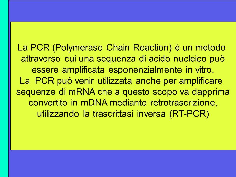 E possibile ricercare materiale nucleare del virus tramite metodiche complesse come la polymerase- chain-reaction (PCR. RT-PCR) La PCR (Polymerase Cha