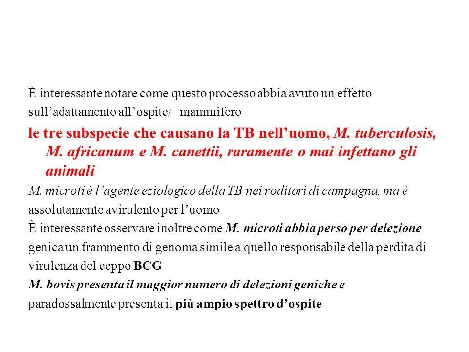 È interessante notare come questo processo abbia avuto un effetto sulladattamento allospite/ mammifero le tre subspecie che causano la TB nelluomo, M.