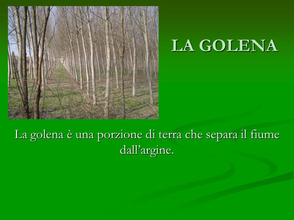 LA GOLENA La golena è una porzione di terra che separa il fiume dallargine.