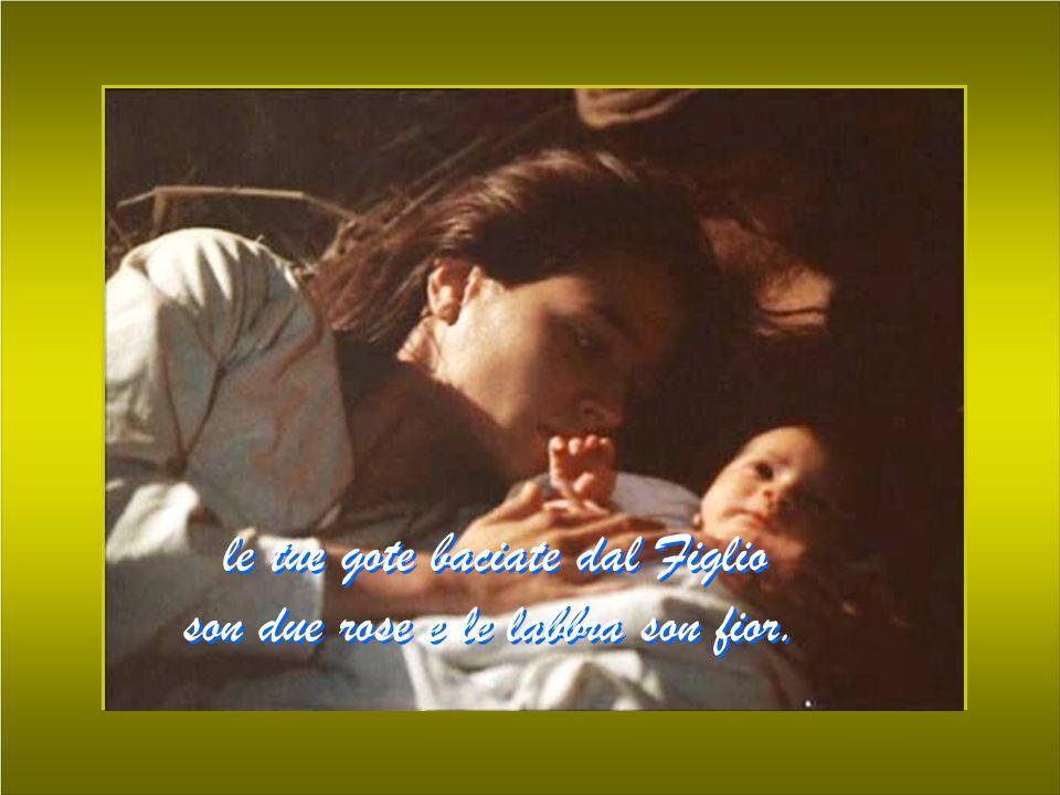 le tue gote baciate dal Figlio son due rose e le labbra son fior. le tue gote baciate dal Figlio son due rose e le labbra son fior.
