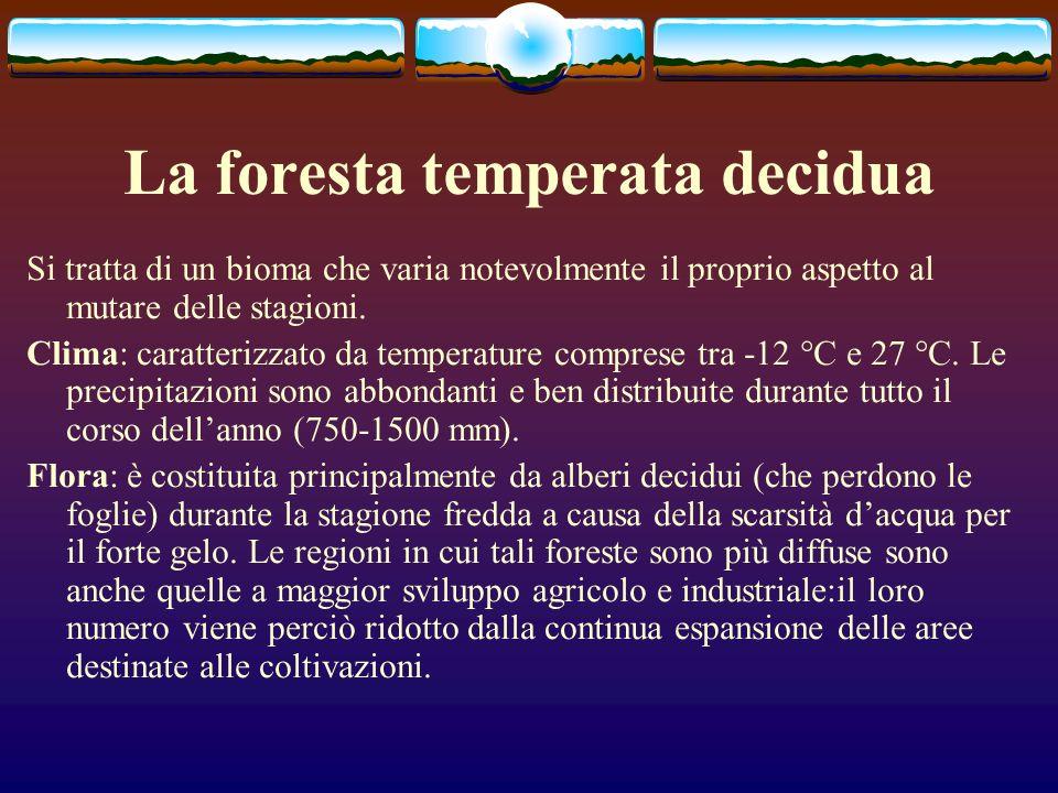 La foresta temperata decidua Si tratta di un bioma che varia notevolmente il proprio aspetto al mutare delle stagioni. Clima: caratterizzato da temper
