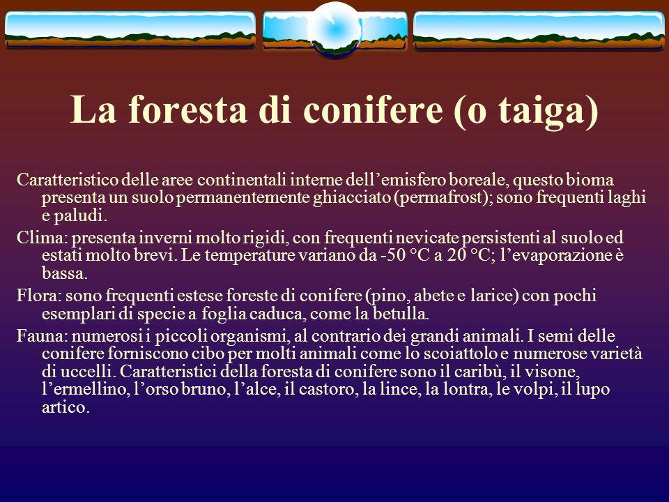 La foresta di conifere (o taiga) Caratteristico delle aree continentali interne dellemisfero boreale, questo bioma presenta un suolo permanentemente g