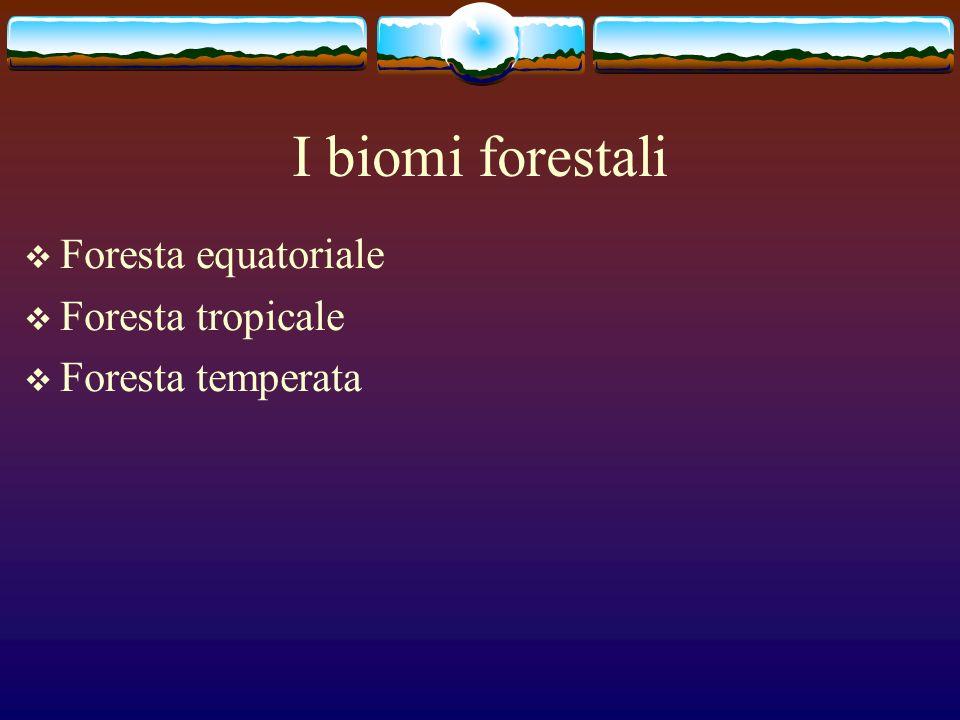 I biomi forestali Foresta equatoriale Foresta tropicale Foresta temperata
