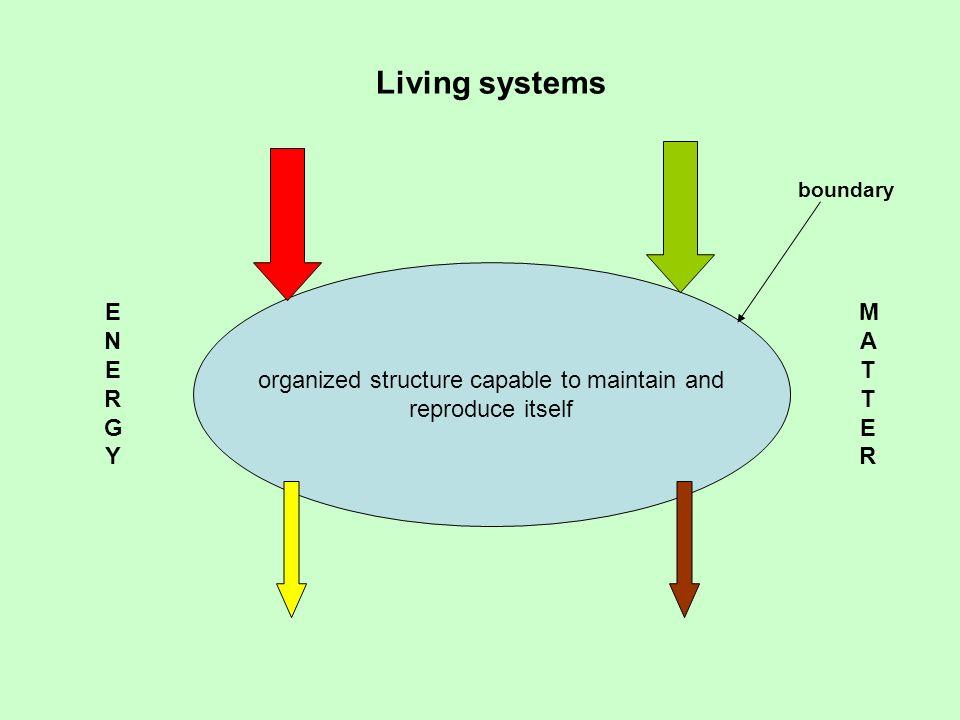 Ecosystem ENERGYENERGY MATTERMATTER