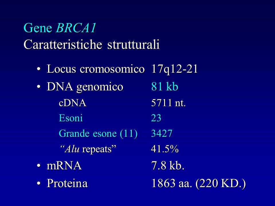 Gene BRCA1 Caratteristiche strutturali Locus cromosomico17q12-21Locus cromosomico17q12-21 DNA genomico81 kbDNA genomico81 kb cDNA5711 nt. Esoni23 Gran