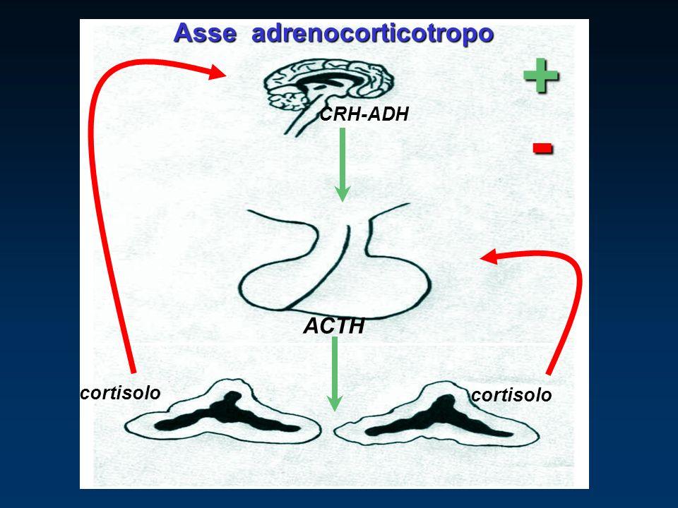 CRH-ADH ACTH cortisolo + - Asse adrenocorticotropo
