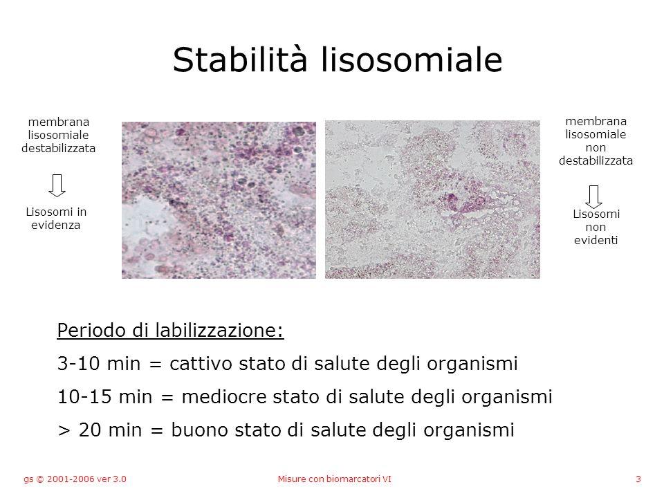 gs © 2001-2006 ver 3.0Misure con biomarcatori VI3 Stabilità lisosomiale Periodo di labilizzazione: 3-10 min = cattivo stato di salute degli organismi 10-15 min = mediocre stato di salute degli organismi > 20 min = buono stato di salute degli organismi membrana lisosomiale destabilizzata Lisosomi in evidenza membrana lisosomiale non destabilizzata Lisosomi non evidenti