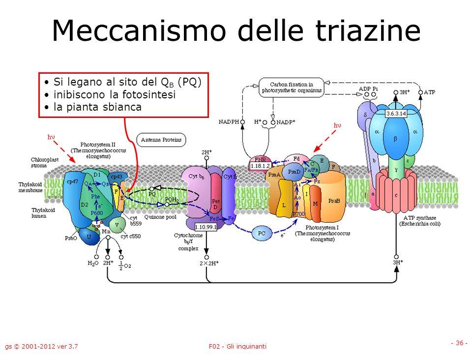 gs © 2001-2012 ver 3.7F02 - Gli inquinanti - 36 - Meccanismo delle triazine Si legano al sito del Q B (PQ) inibiscono la fotosintesi la pianta sbianca
