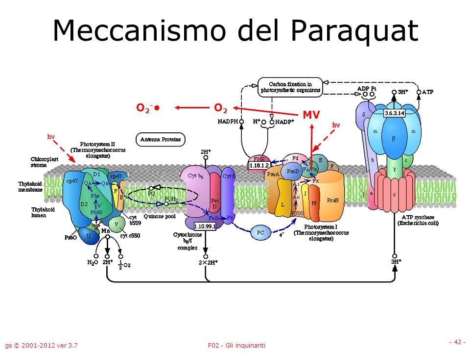 gs © 2001-2012 ver 3.7F02 - Gli inquinanti - 42 - Meccanismo del Paraquat MV O2O2 O 2 -