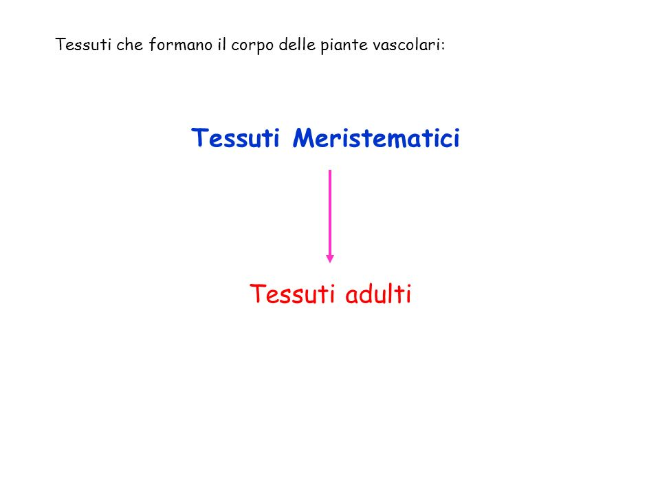 Tessuti Meristematici Tessuti adulti Tessuti che formano il corpo delle piante vascolari: