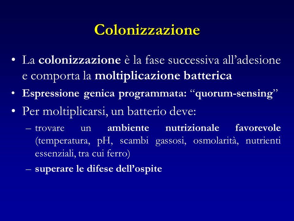 Colonizzazione La colonizzazione è la fase successiva alladesione e comporta la moltiplicazione batterica Espressione genica programmata: quorum-sensi