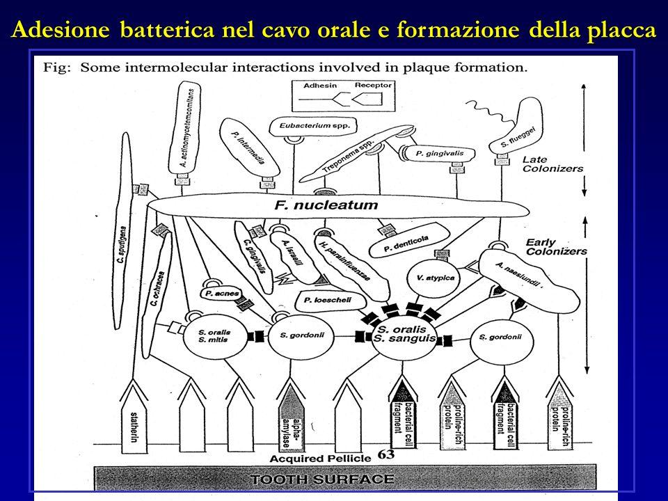 Adesione batterica nel cavo orale e formazione della placca