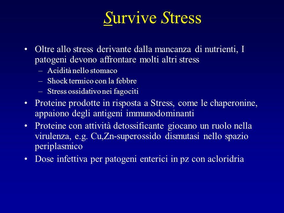 Survive Stress Oltre allo stress derivante dalla mancanza di nutrienti, I patogeni devono affrontare molti altri stress –Acidità nello stomaco –Shock