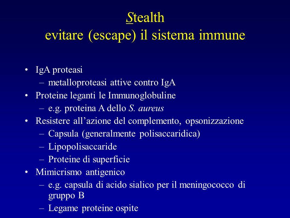 Stealth evitare (escape) il sistema immune IgA proteasi –metalloproteasi attive contro IgA Proteine leganti le Immunoglobuline –e.g. proteina A dello
